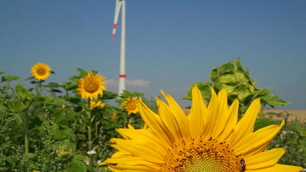 Wust – Wind & Sonne